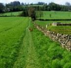 Broombriggs Farm