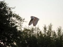 enviromental-owl-240