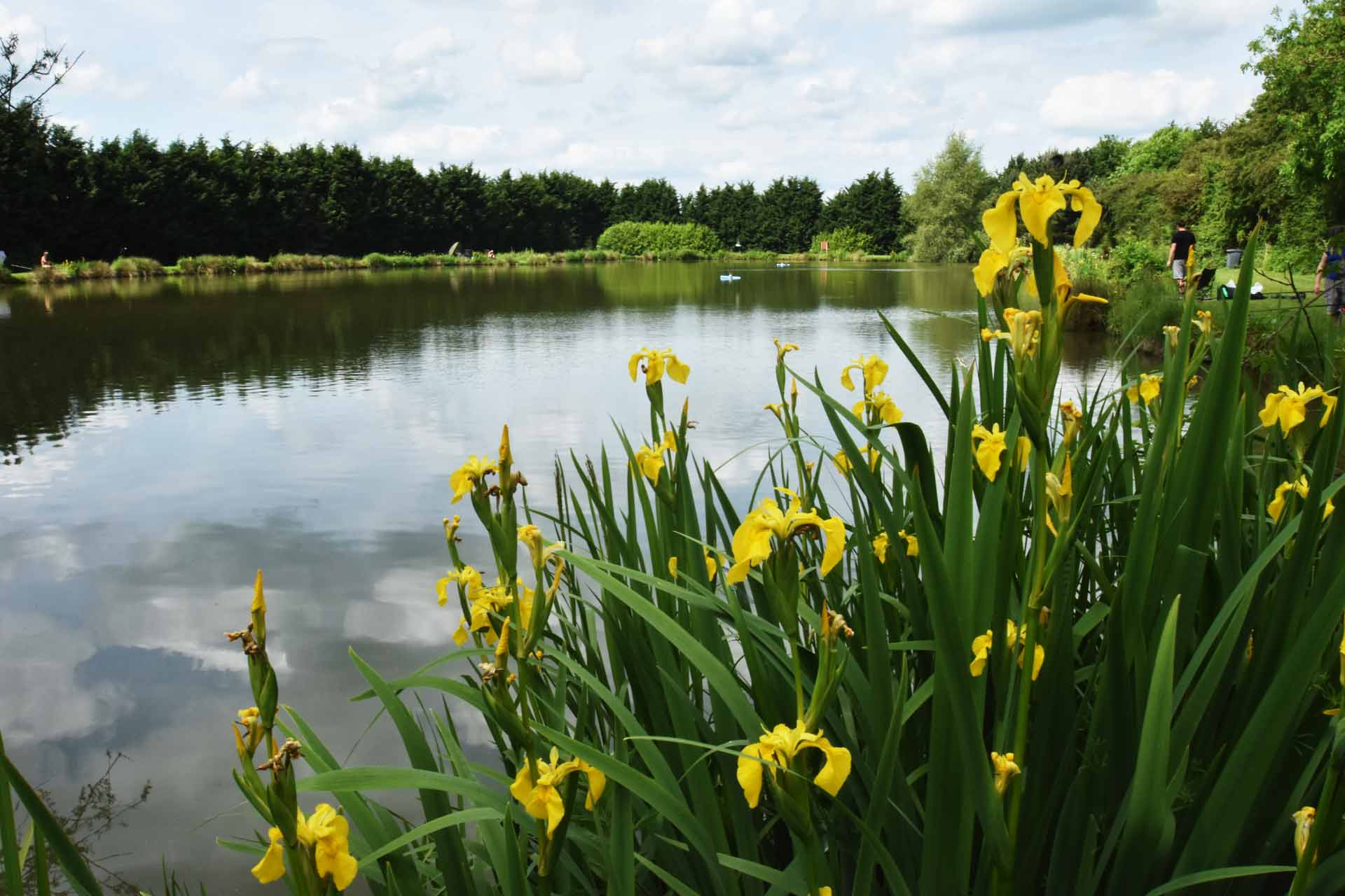 Eye-Kettleby-Lakes-Flowers-Lake-Two