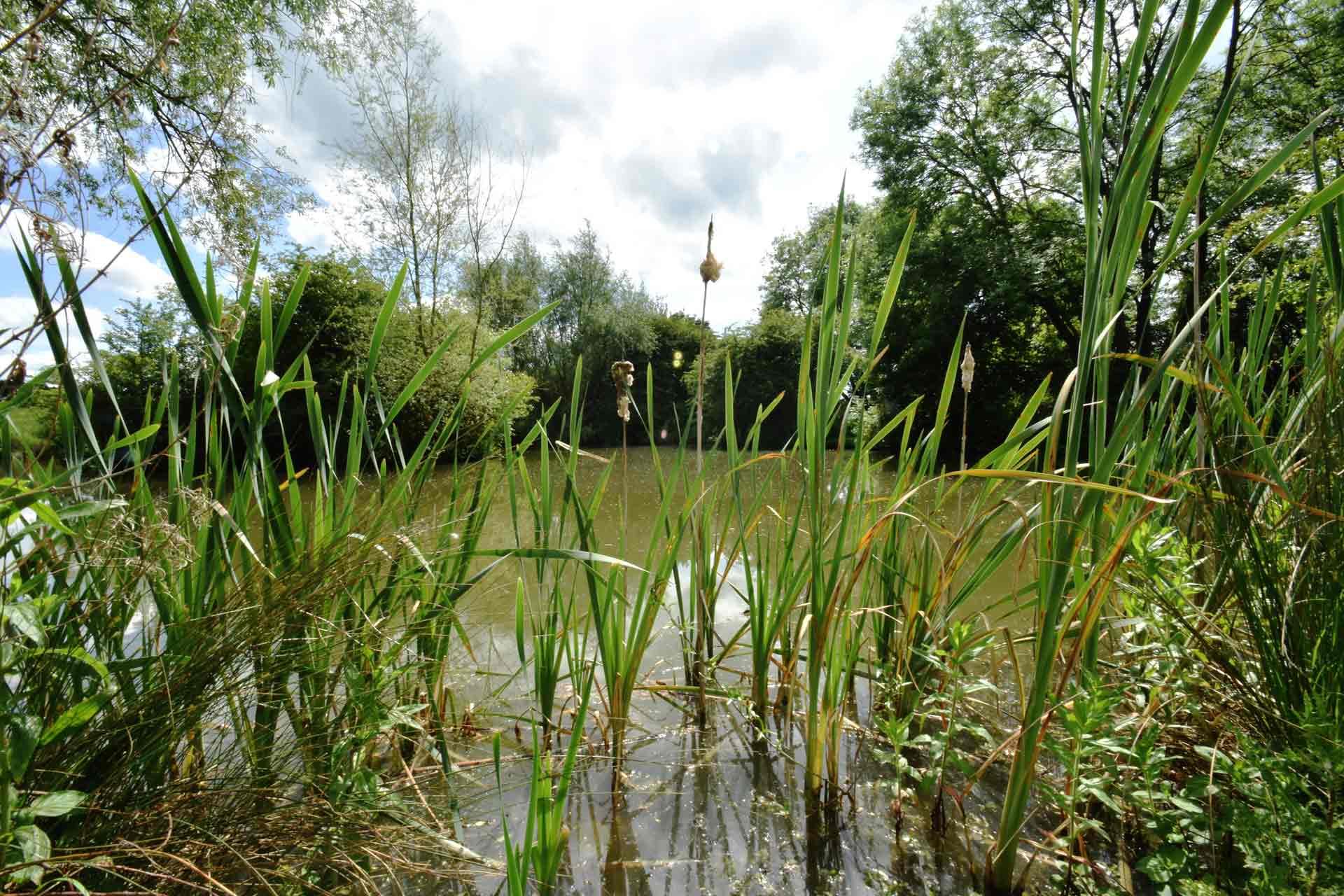 Eye-Kettleby-Lakes-Lake-One-Peg