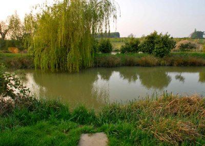 Eye-Kettleby-Lakes-Lake-Siz-Willow-Tree